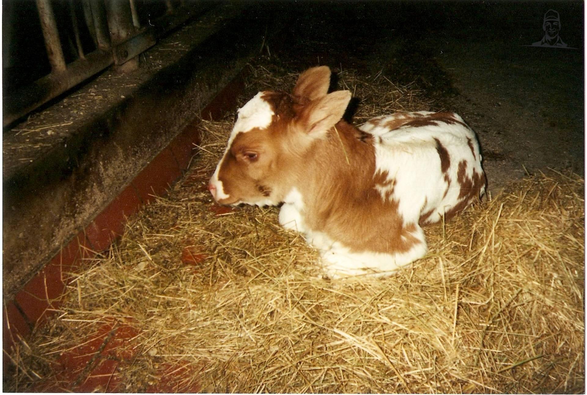 Koeien van johndeere9620fan