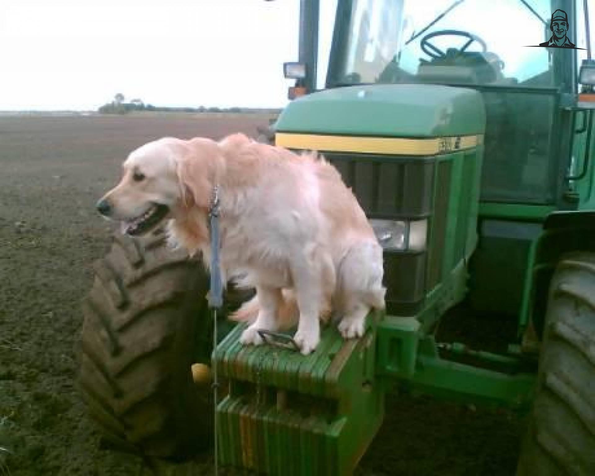 Honden van Diesel-in-Fendt