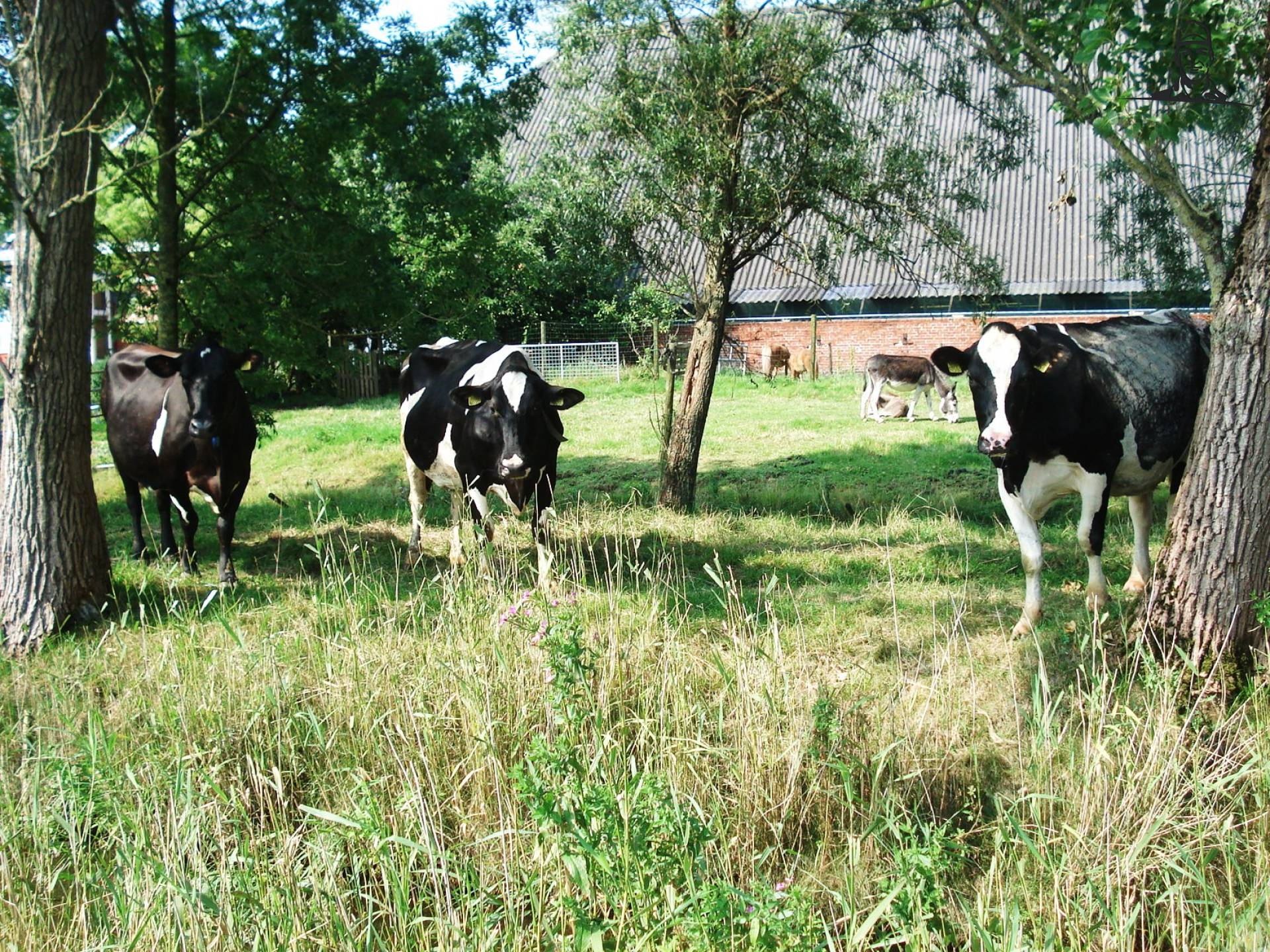 Koeien van eelko