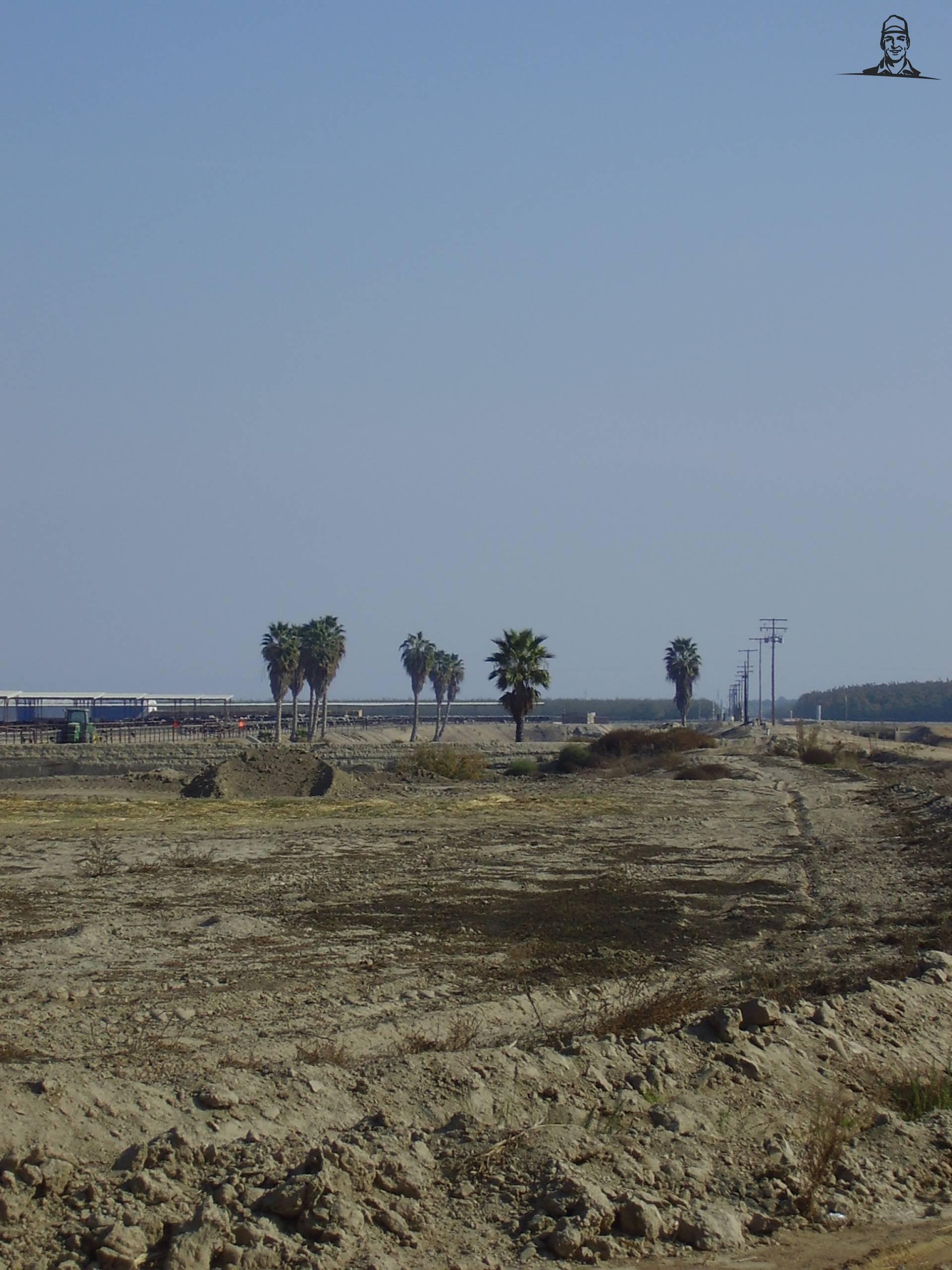 mooie palmbomen bij een boerderij van JJ AD