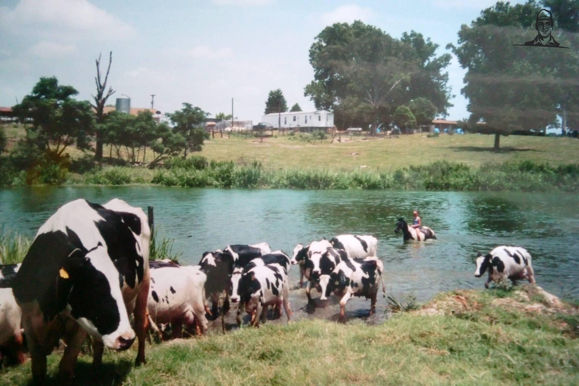 effe koeien op halen van DeertjePower