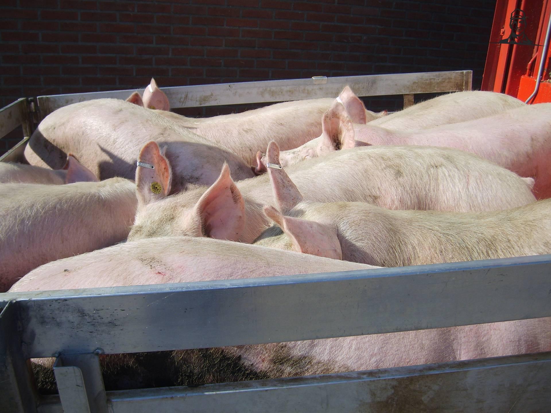 De laatste varkens gaan weg van JD 8530