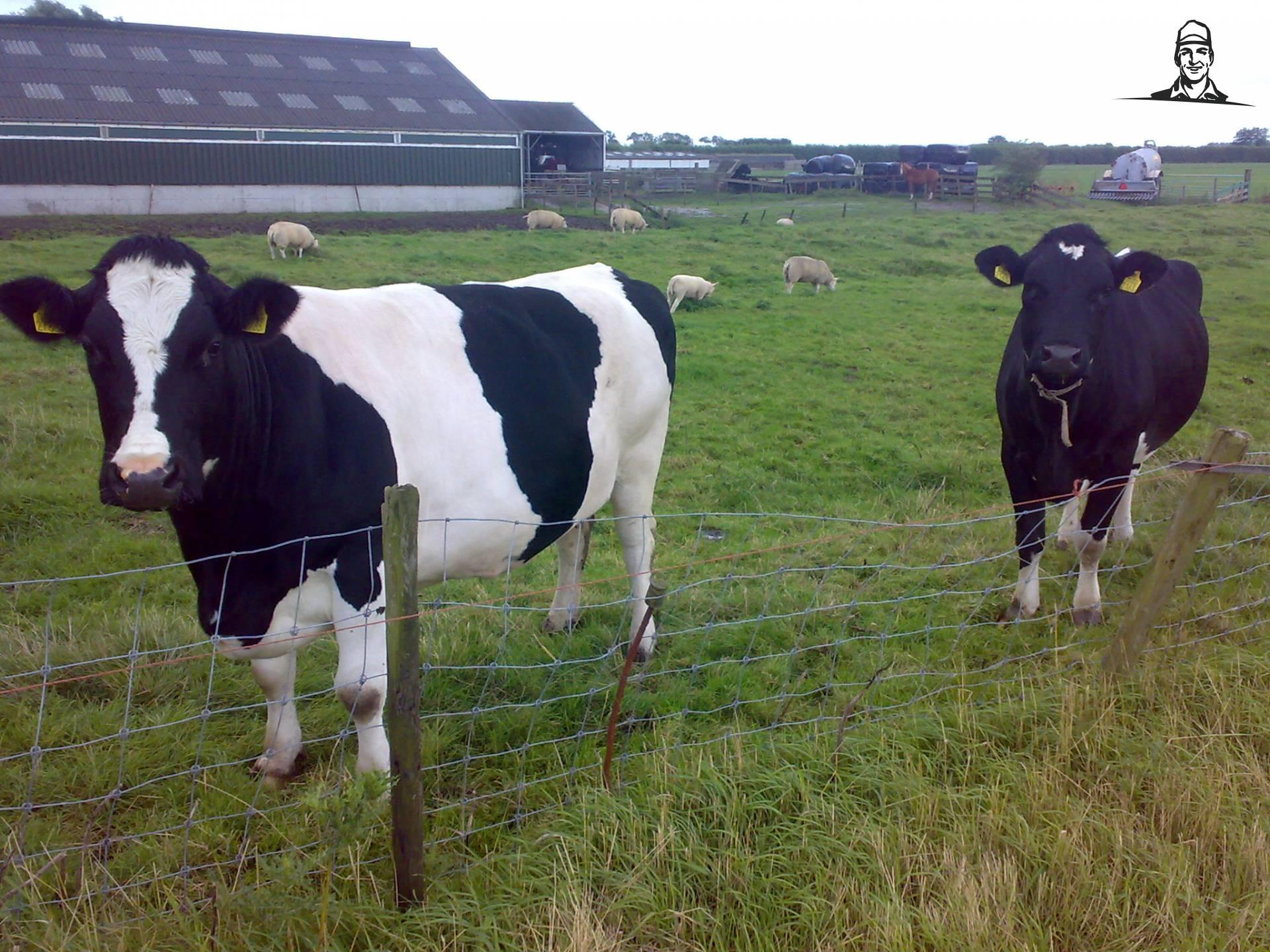 Droge koe van Valtra-Fordpower