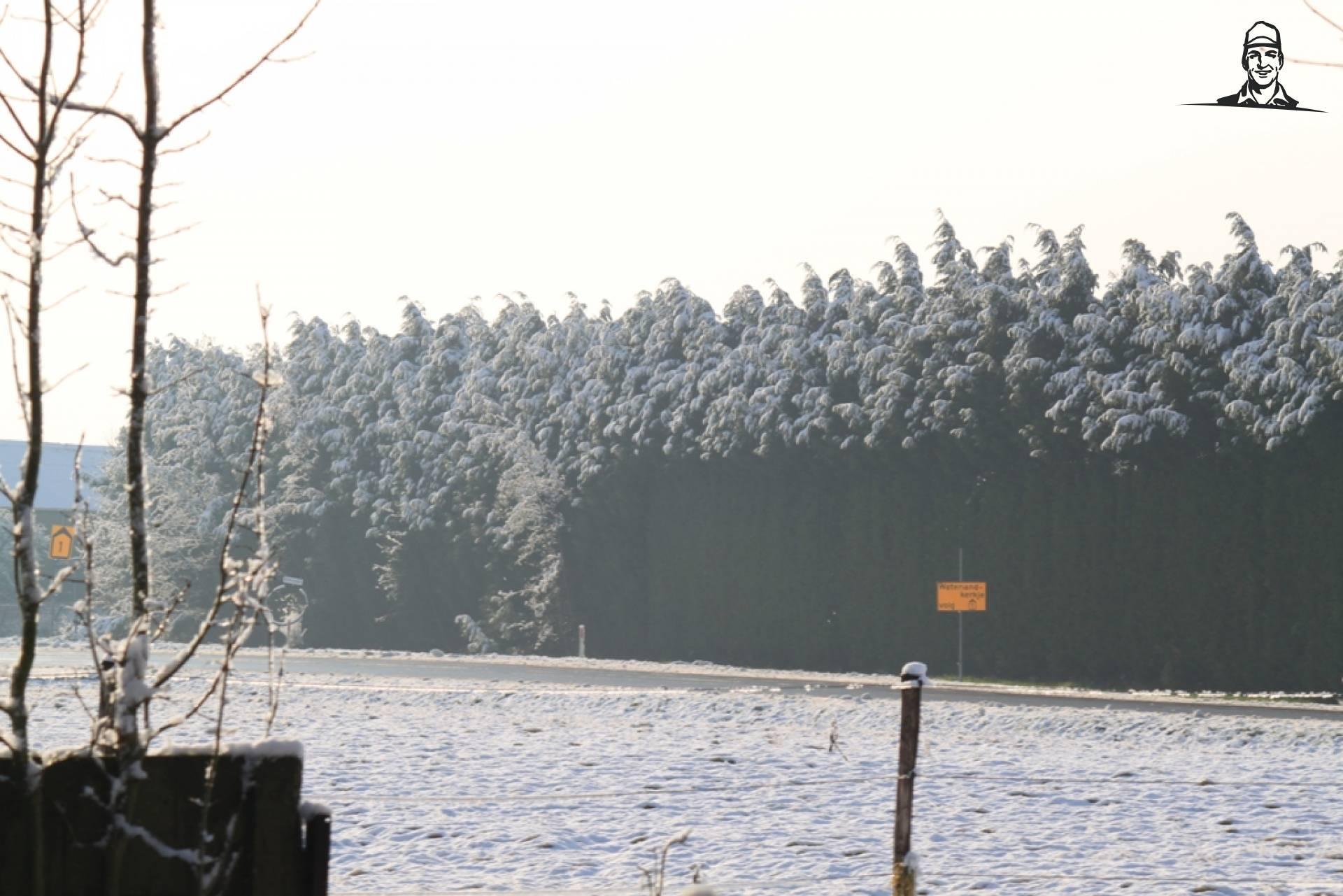 landschap van alfredo