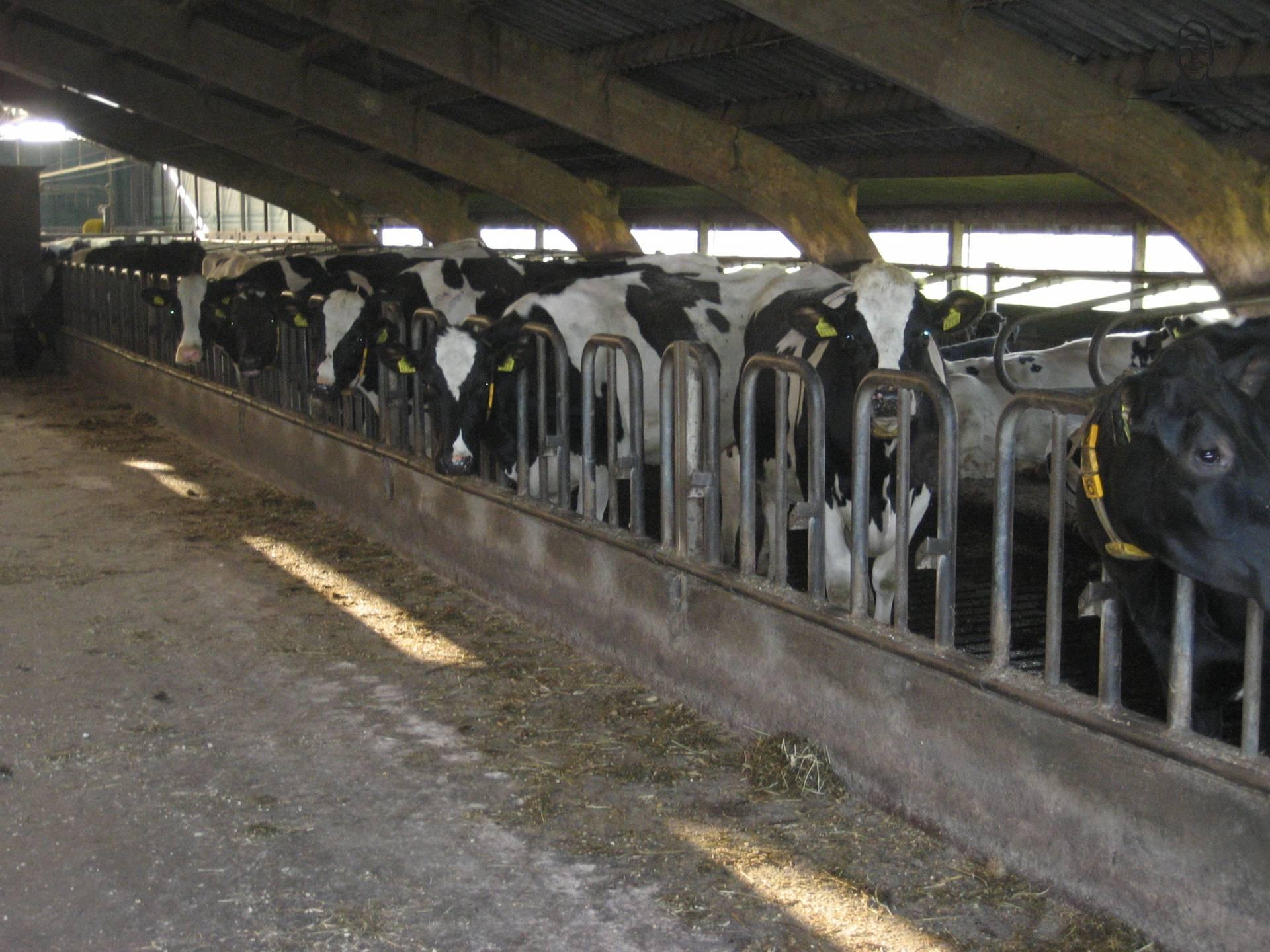 Koeien van Valtraboerties