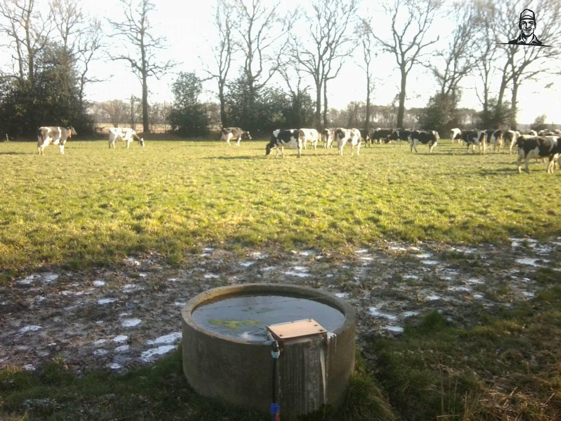 Koeien in de wei 1-2-2012 van Koeienboer Jannes