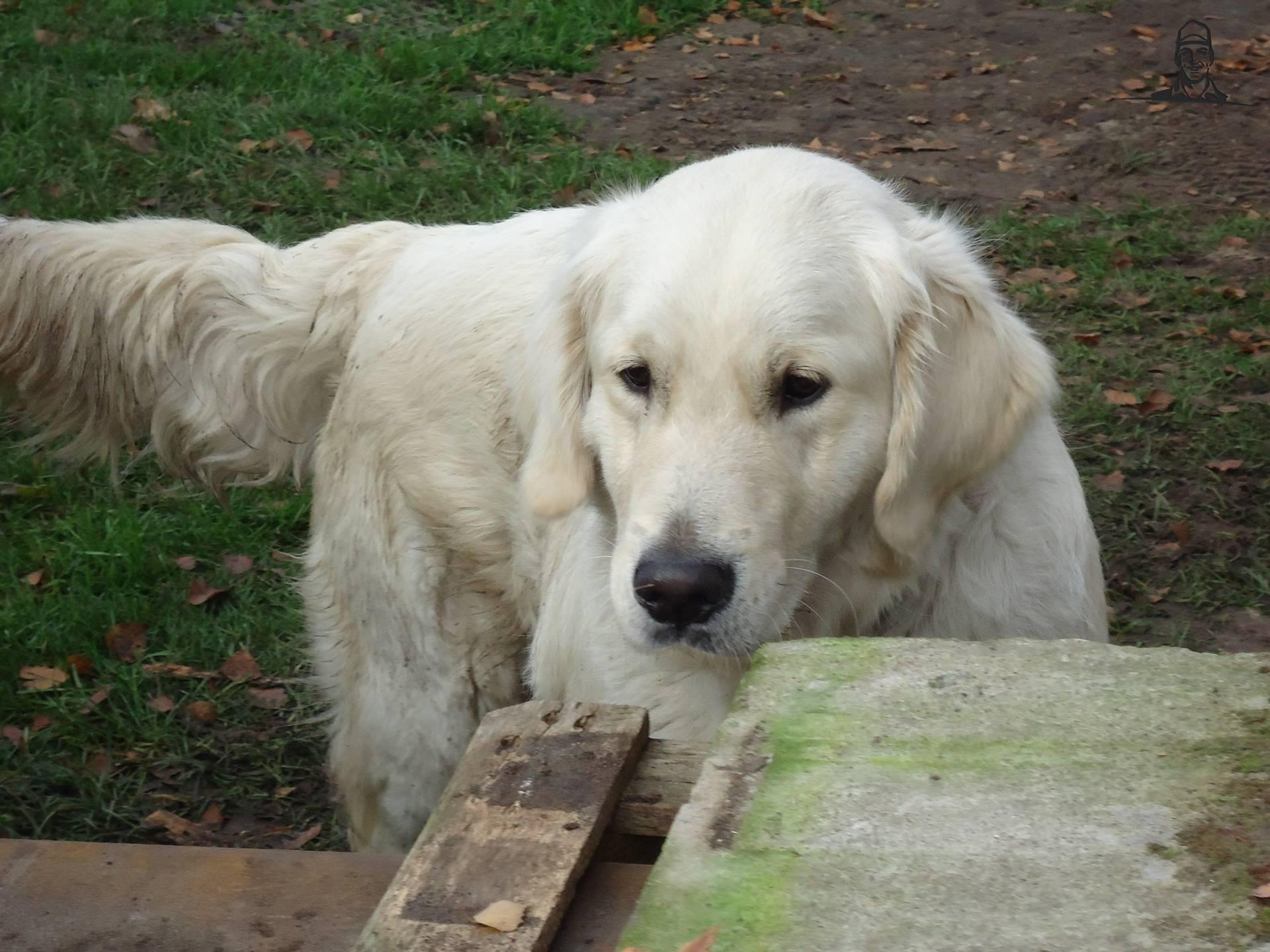 onze hond ;) van NHtvt135