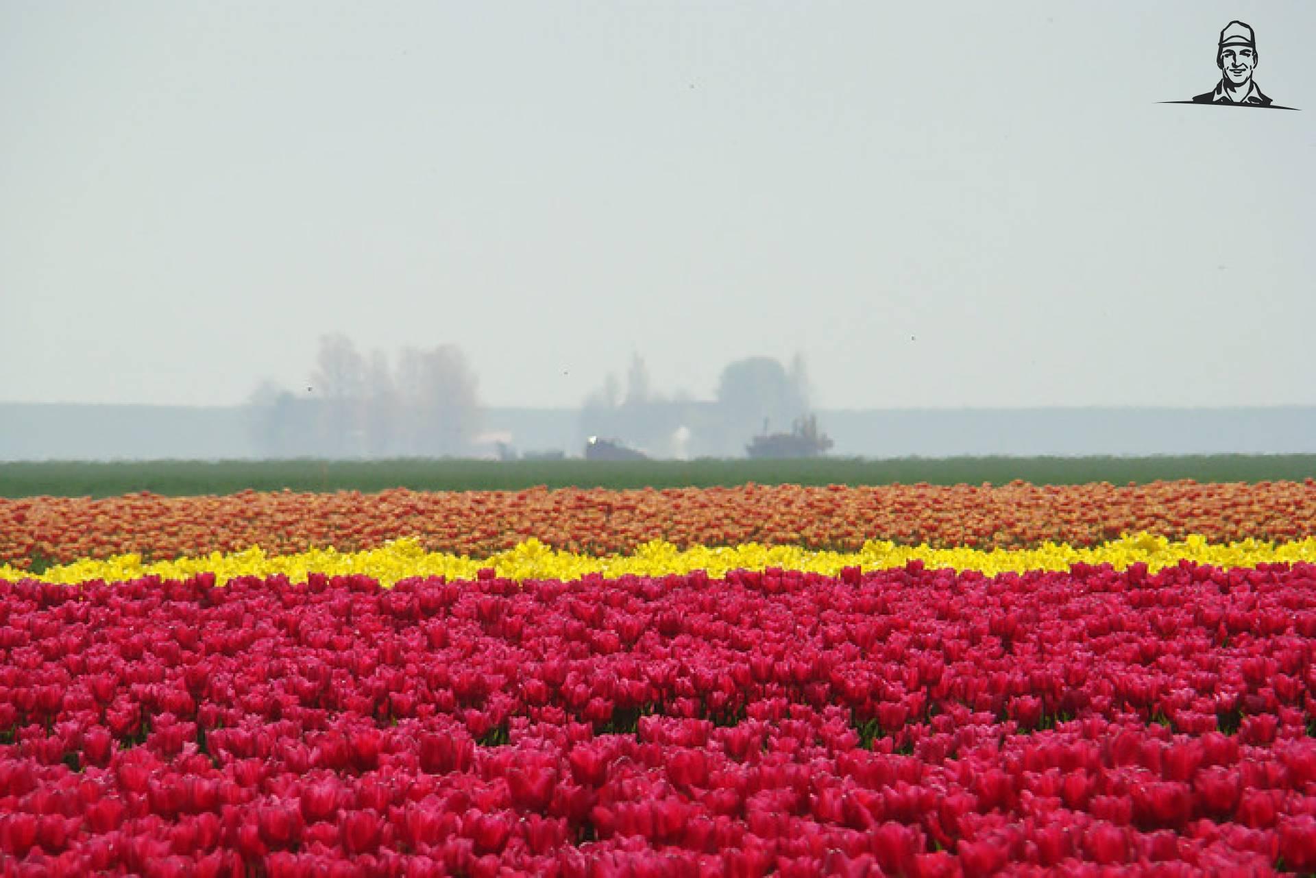 Tulpen staan er mooi bij van Johndeeretje