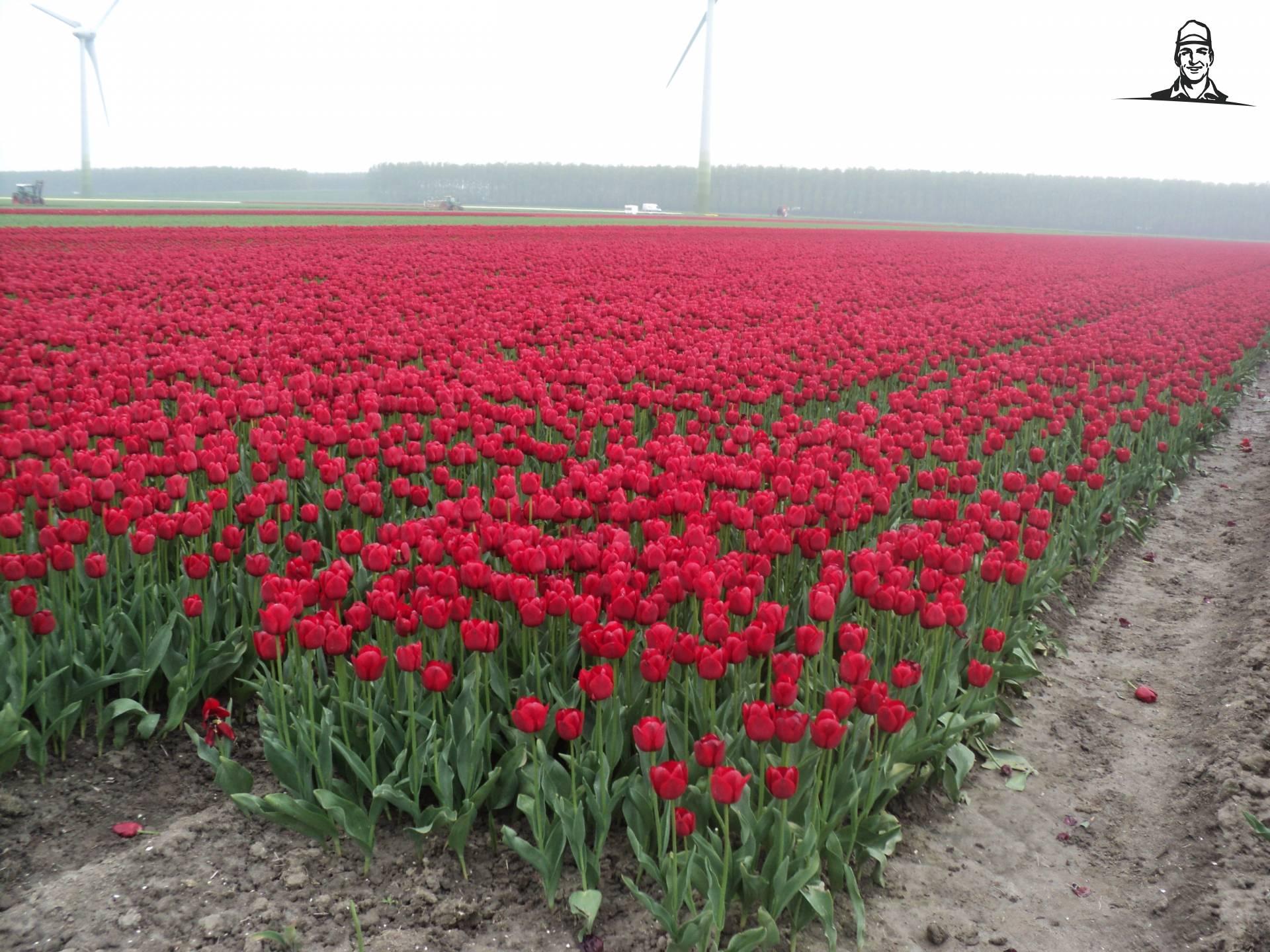 Tulpen van Fendt_John Deere