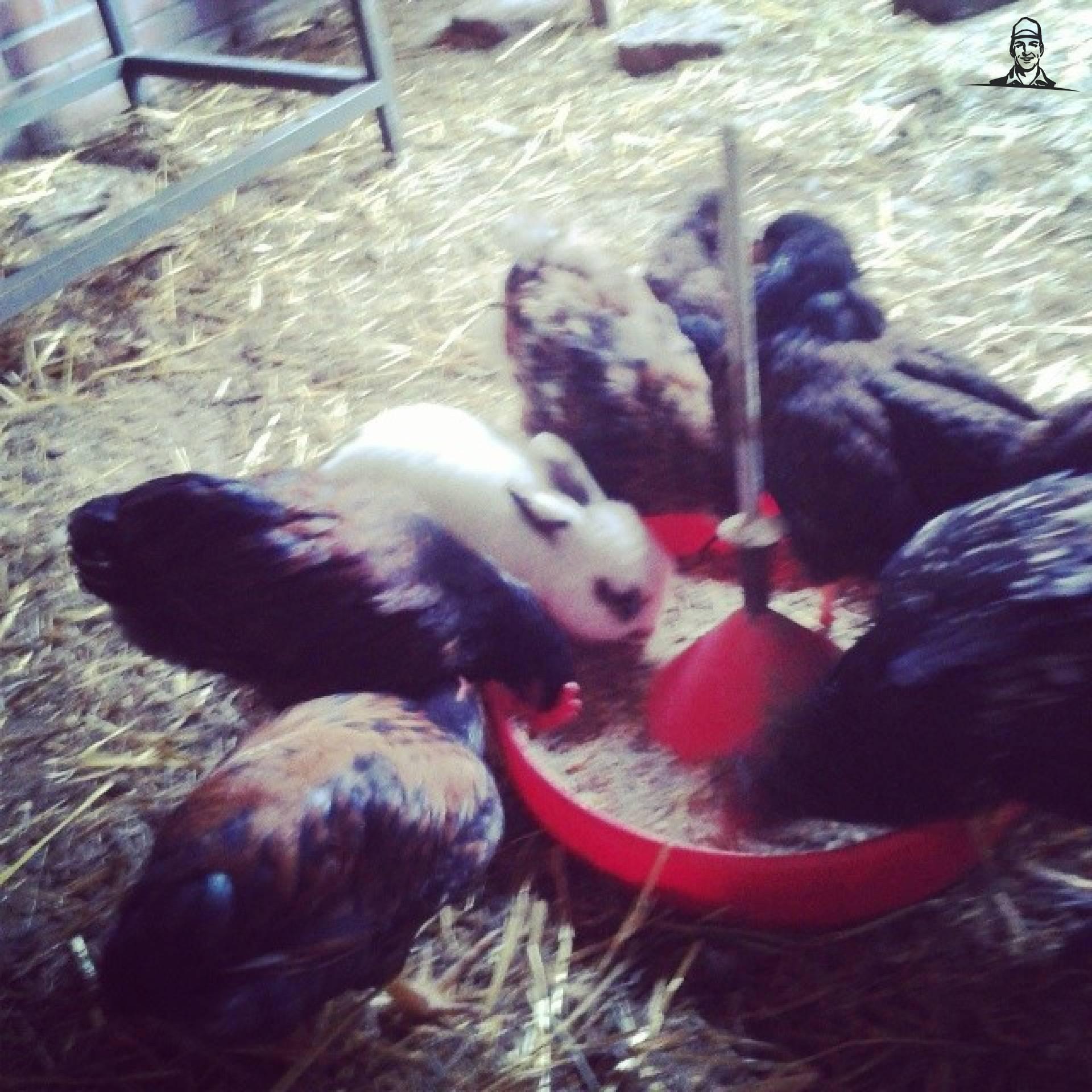 kippies van Bluetrekker