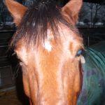 ons paard