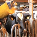 Automatische koeienborstel
