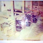 Kalverhuisvesting 1985