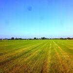 Bemest landschap