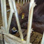 hoe ijdel kan een stier zijn