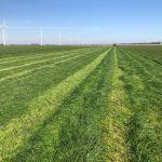 De eerste snede gaat eraf bij Biddinghuizen #oogst2017 #melkvee #Havera 2 #agrifoto